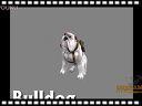 火炬之光2(Torchlight 2)-宠物预告片