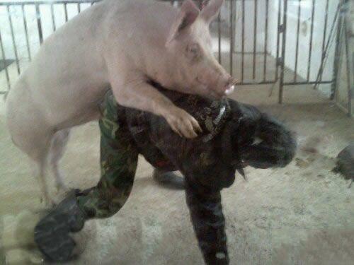 热爱橹之人与动物最新版_壁纸 动物 狗 狗狗 500_375