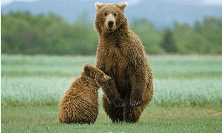 可怜.木秀于林风必摧之,熊霸于群人必阉之.图片