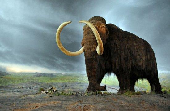 俄罗斯建立灭绝动物克隆实验室 使猛犸象复活
