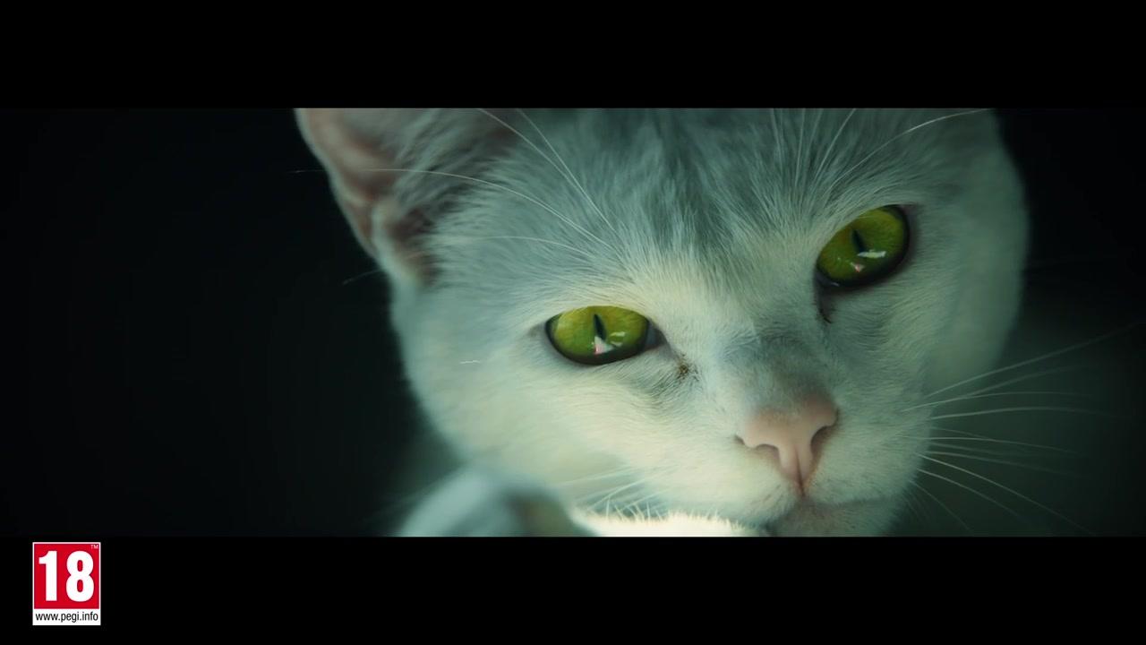 《幽灵行动:荒野》新实景宣传片展示可爱小猫咪