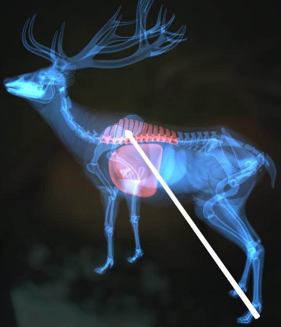 猎人荒野的呼唤个动物秒杀位置介绍