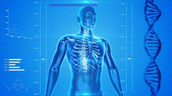 生物人体结构_原来的生物书要改写?国外科学家发现人体新器官